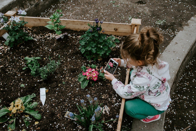 Plant an organic garden